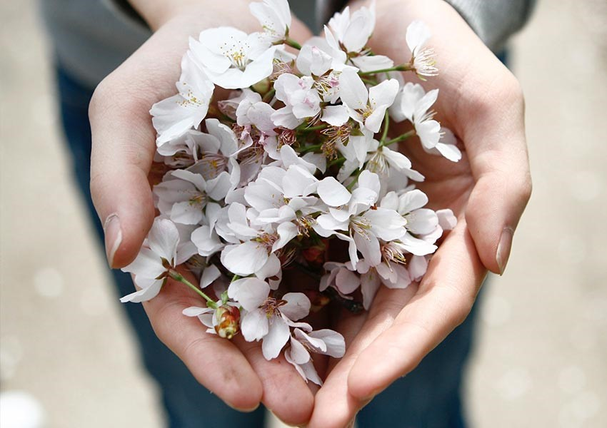 charity gifts hands holding petals